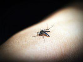 Malaria alert