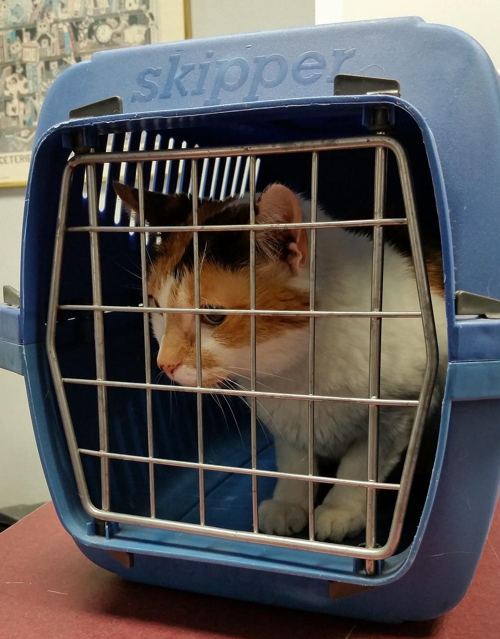 cat cargo