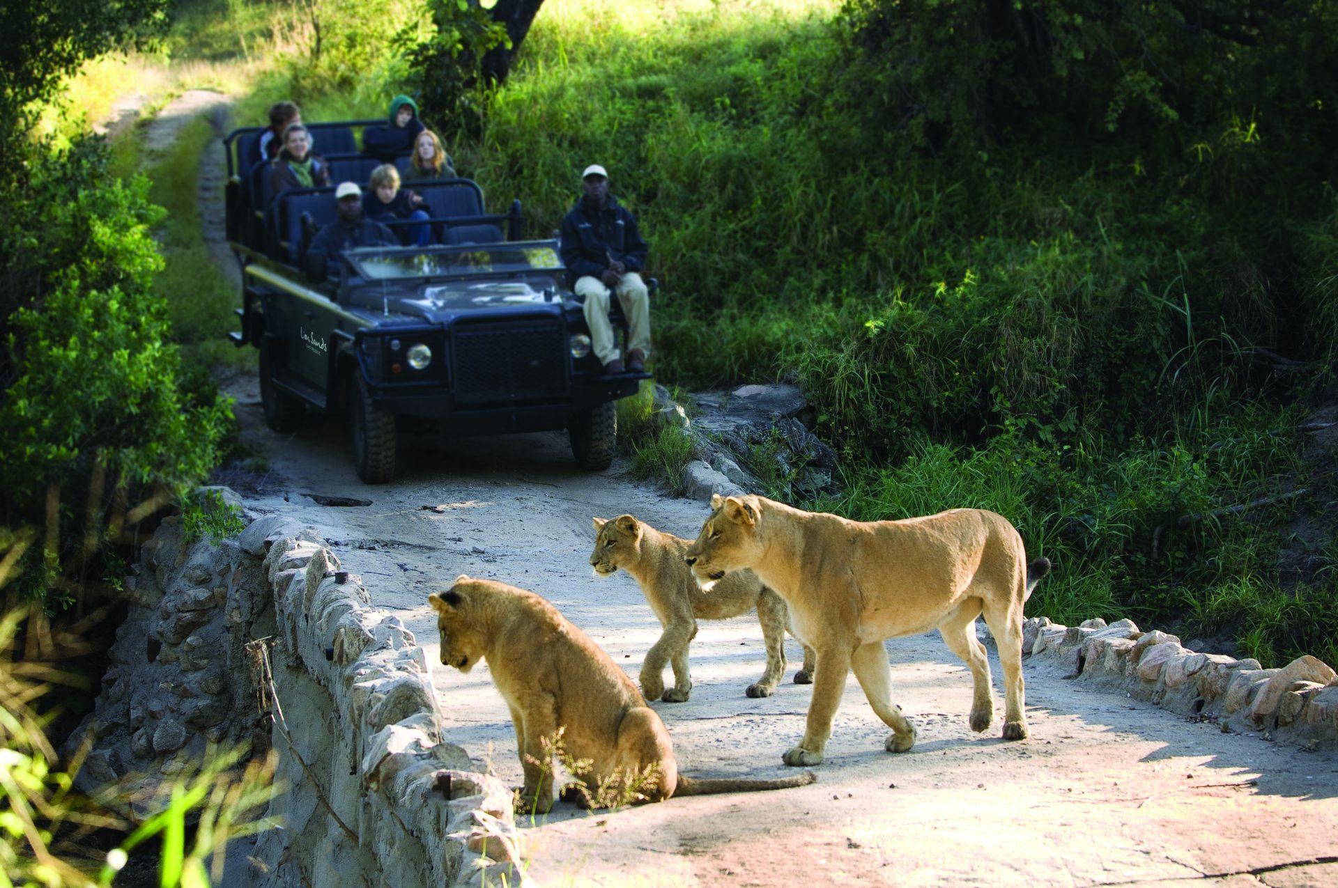 Kruger National Park in Africa 97