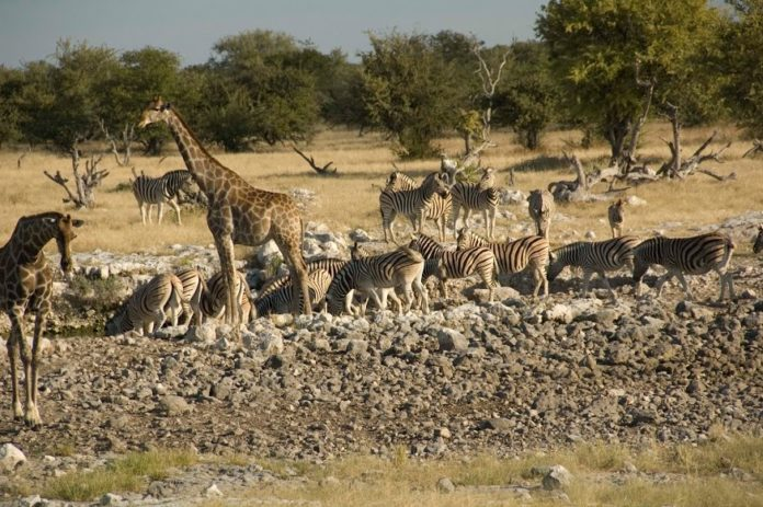 Safari wishlist