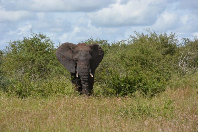 SA National Parks week