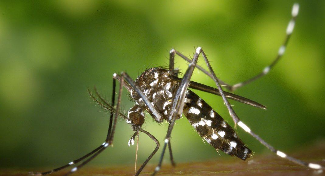 Zambia Zika