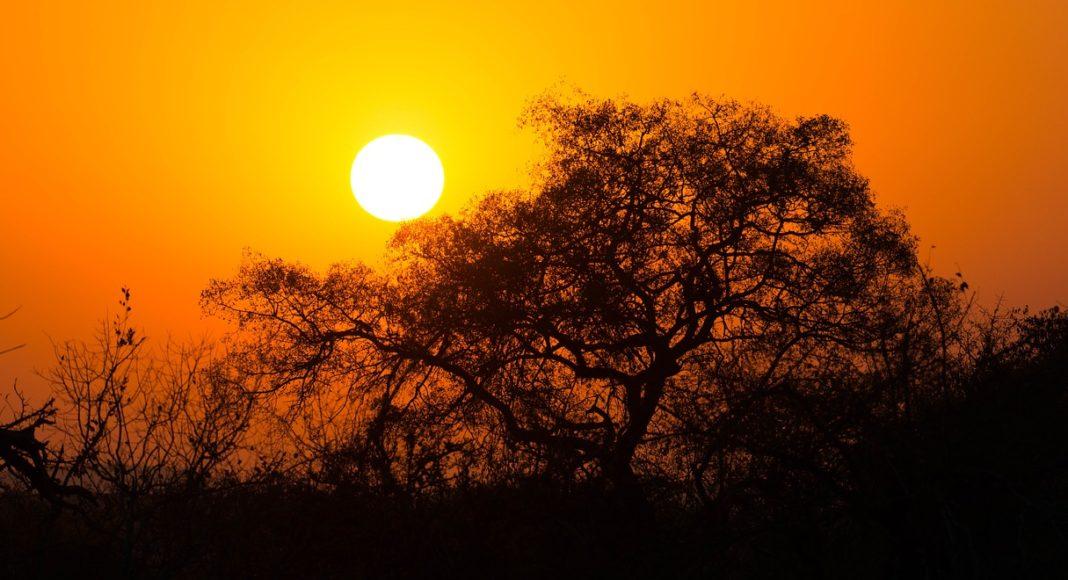 Kruger National Park Day visitors
