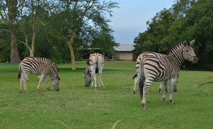 Tala Game Reserve