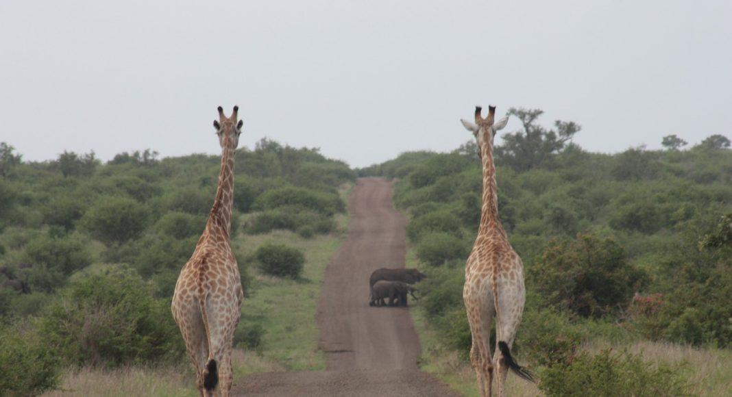 Kruger Park visitors