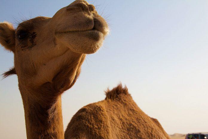 Getaway in Abu Dhabi