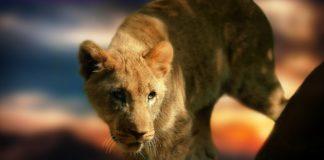 leading-edge animal welfare