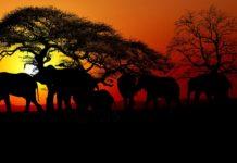 Poacher risk
